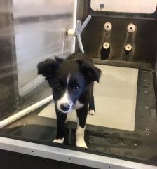 Titan as a puppy!