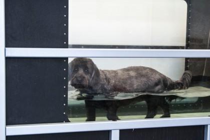Tavish, working in the Underwater Treadmill